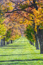 Rows Of Fall Trees