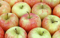 Rows gala apples Royalty Free Stock Image