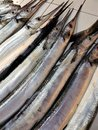 Rows of Garfish aka Snipe for sale at a Filipino fish market Royalty Free Stock Photo