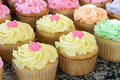Rows of Pastel Cupcakes Stock Photo