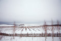 Rows of plants in winter field and snow Stock Photography