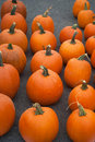 Rows of Pumpkins Stock Photography