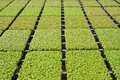 Rows of seedlings in a nursery Stock Photos