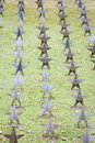 Rows of star tombstone at cemetery gdynia poland soviet burial ground Royalty Free Stock Photography
