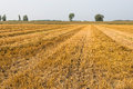 Rows of straw and stubble Royalty Free Stock Photo