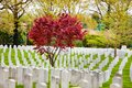 Rows of tombs at spring on military cemetery Royalty Free Stock Photo