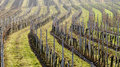 Rows of vine stocks in a winter without snow view across the lower austria Stock Photos