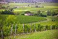 Rows of Vineyard Fields in Southern France Royalty Free Stock Photo
