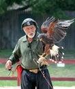 The royal falconer at the renaissance fair Royalty Free Stock Photo