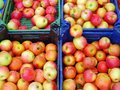 Royal Gala Apples Royalty Free Stock Photo
