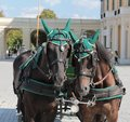Royal horses at Schonbrunn, Viena