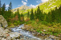 The roztoka stream the high tatras carpathian mountains in valley tatra national park nature reserve Royalty Free Stock Photography