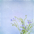Rsvintage old postcard with blue flowe of flax vintage flowers space for text Royalty Free Stock Photos