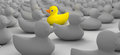 Rubber duck against the flow a non conformist depiction of a yellow bath swimming of a sea of grey ducks Royalty Free Stock Photos