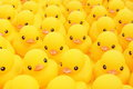 Rubber Duck Royalty Free Stock Photo