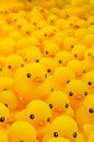 Rubber duck close up of yellow Royalty Free Stock Photo