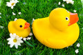 Rubber duck and duckling Stock Photo