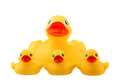 Rubber duck family with three little ducky isolated on white Royalty Free Stock Photo