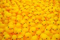 Rubber duck group of yellow Stock Images