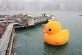 Water, yellow, vertebrate, bird, ducks, geese, and, swans, duck, waterfowl, beak