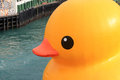 Yellow, vertebrate, orange, water, bird, ducks, geese, and, swans, inflatable, beak, duck, recreation