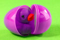 Rubber duck in plastic egg closeup of purple opened with green background Stock Photos
