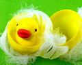 Rubber duck in plastic egg a a with soft feathers Royalty Free Stock Photo