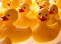 Rubber Duckies Stock Photos