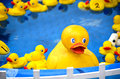 Rubber duckies at a carnival game small and large float in blue tub the county fair children pick up any duck and the number on Stock Image