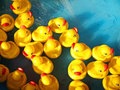 Rubber ducks in a children s pool Royalty Free Stock Images