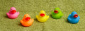 Rubber ducks isolated Royalty Free Stock Image
