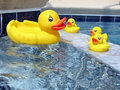 Rubber Ducks in the Tub Stock Photography