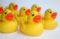 Rubber ducks yellow duck isolated on the white background Royalty Free Stock Image