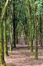 Rubber Plantation Series III Stock Photo