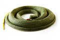 Rubber snake a small green toy Royalty Free Stock Photo