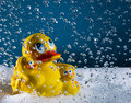 Rubberduck Royalty Free Stock Photo