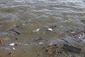 Rubbish svävar på floden Arkivbilder