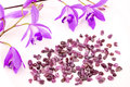 Ruby and purple orchid gemstone flowers on white background Stock Image