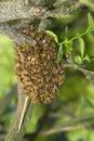 Ruche d'abeille de miel Photos stock