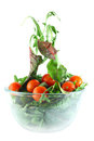 Rucola, Chard and tomatoes salad lightness concept Royalty Free Stock Photography