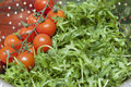 Rucola and tomatoes Stock Photography