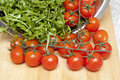 Rucola and tomatoes Royalty Free Stock Photography