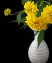 Rudbeckia flowers in vase iosolated Royalty Free Stock Photo