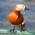Ruddy Shelduck, Brahminy Duck, Tadorna ferruginea Royalty Free Stock Photography