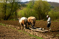 Rudimentary agriculture in a romanian village Royalty Free Stock Photo