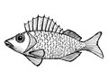 Ruffe hand drawn cartoon sketch illustration of Stock Photography