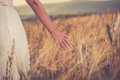 Ruffle with hand in wheat ears of on field summer Stock Image