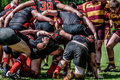 Rugby union scrum players in action at match of vilnius academy lithuania vs okehampton england may in vilnius lithuania Stock Images