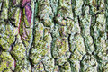 Rugged bark of a tree an old Stock Photography