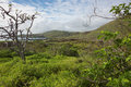 Rugged green landscape of Floreana Royalty Free Stock Photo